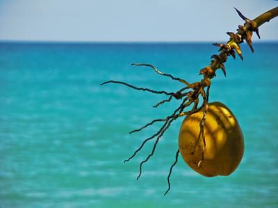 sonnenfrucht