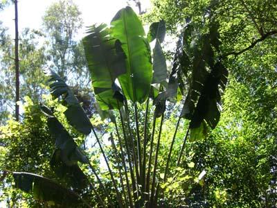 Regenwald 2